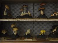 Collezione micologica Tortori